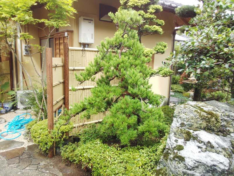 庭の木々2